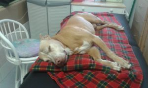 Rescue dog after massage