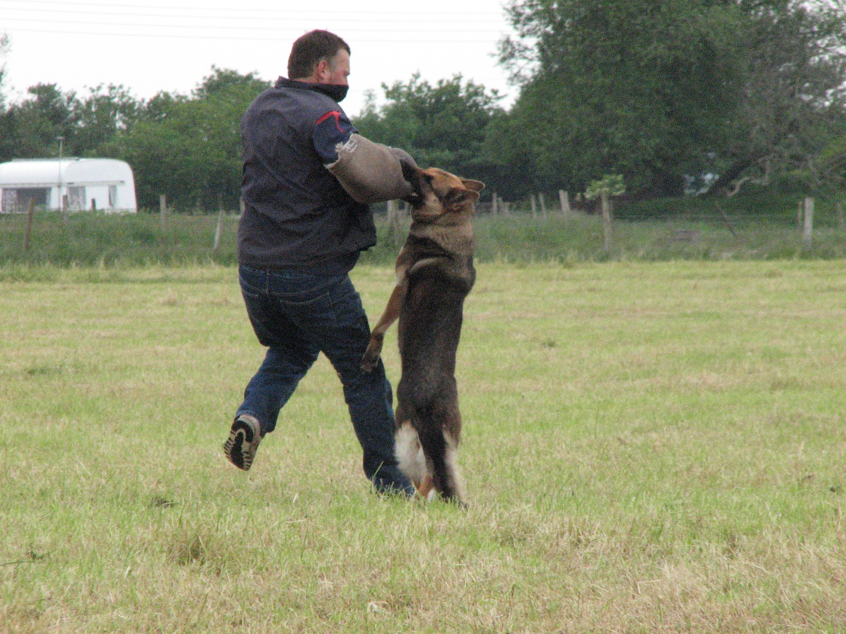 GSD training catching criminal