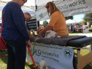 Canine massage, Florida, K9 Body Works